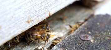 Bee coming out after winter Royalty Free Stock Image