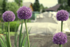 Bee and a decorative onions. Royalty Free Stock Images