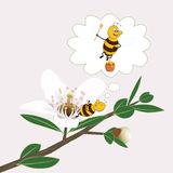 Bee is dreaming on a manuka flower. A cute bee is dreaming on a manuka flower(unique to New Zealand Royalty Free Stock Photos