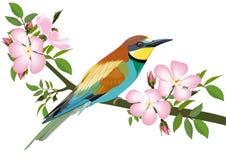 Bee-eater bird. Sitting on wild rose branch Royalty Free Stock Photo