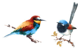 Bee-eater and Fairy Wren Birds Watercolor Illustration Set Hand Drawn Stock Image