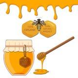 Bee eating honey Stock Image