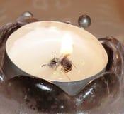 Bee1 royaltyfri foto