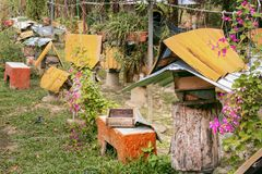 Bee farm - apiary with beehives from old stumps for black bees - carpenters genus xylocopa. On a sunny day stock photos