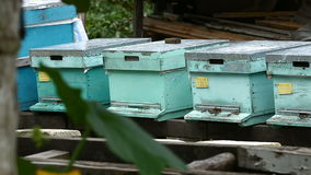 Bee Farm stock footage