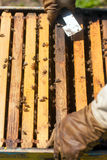 Bee farmer with smoker on a hive Stock Photography
