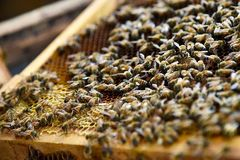 Bee farming Royalty Free Stock Photos