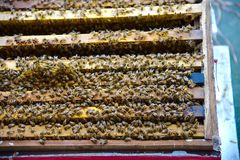 Bee farming Royalty Free Stock Image