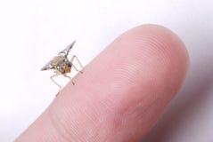 Bee on finger Stock Photo
