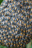 Bee flies Stock Photos