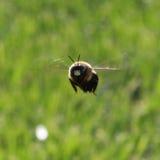 Bee. Flight, nature, landscape, scenery Royalty Free Stock Photos