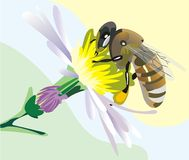 Bee on the flower stock illustration