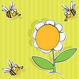 Bee and flower. Summer background with funny bees and big Chamomile Royalty Free Stock Image