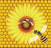 Bee on a flower. Raster illustration, flying bee and bee on a flower on the background of a honeycomb Stock Photo