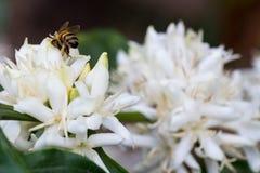 Bee flower Stock Image