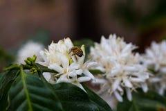 Bee flower Stock Photos