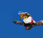 Bee on flower. This is a honey bee in a flower getting nectar Stock Photography