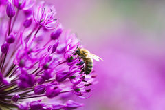 Bee on a flower Stock Photography