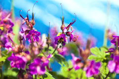 Bee and flower Stock Photography
