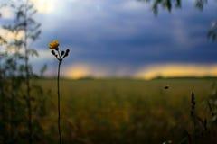 Bee. Flower field sky Stock Image