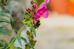 Bee on flower collecting pollen stock images