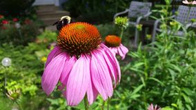 Bee and flower stock video