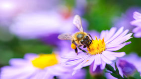 Bee on the flower stock photos