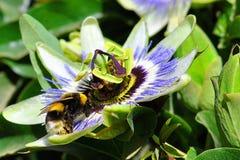 Bee, Flower, Honey Bee, Flora stock photos
