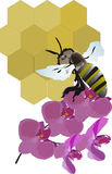 Bee, flower and honeycomb Stock Images