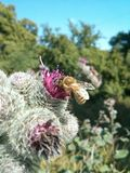 Bee on the flower  macro shot. Bee on the flower macro Stock Photo