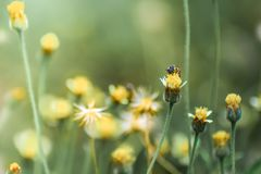 The bee on the flower stock photography