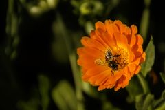 Bee, Flower, Spring, Macro, Nature Stock Photos