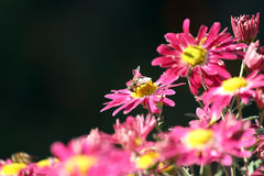Bee on flower spring scene Stock Photo