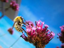 A bee is on a flower during summer. Cute little bee is on a flower in summer, close-up macro shot Stock Photo