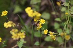 Yellow wild flowers and bee stock photos