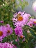 Bee flowers stock image
