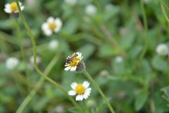 Bee with flowers Stock Images