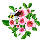 Bee in flowers icon, cartoon style. Bee in flowers icon. Cartoon of bee in flowers vector icon for web design isolated on white background royalty free illustration