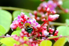Bee and Flowers Stock Images