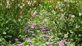 Bee on flowers, macro stock video footage