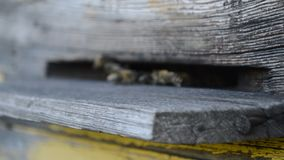 Bees fly from the hive stock footage