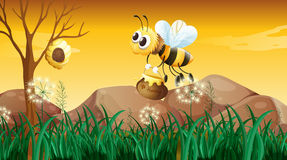 A bee flying going to the beehive Stock Photo