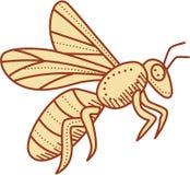 Bee Flying Mono Line Stock Image