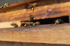 Bee Flying To Hive Royalty Free Stock Photography