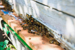 Bee flying to hive. Stock Photography