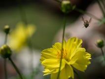 The bee is flying toward us. Stock Image