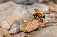 Bee in forest. Stock Image