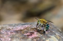 Bee in forest. Stock Images