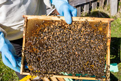 Bee frame with honeycomb and bees Stock Photo