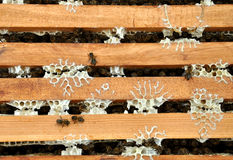 Bee frames with bees. On it stock images